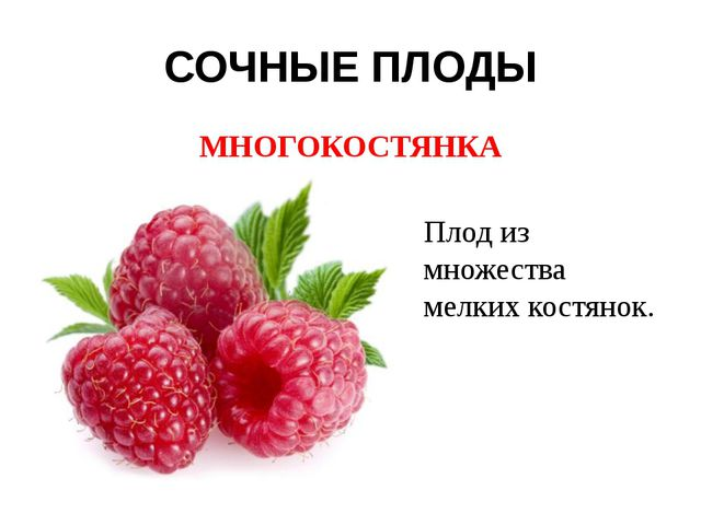 СОЧНЫЕ ПЛОДЫ МНОГОКОСТЯНКА Плод из множества мелких костянок.