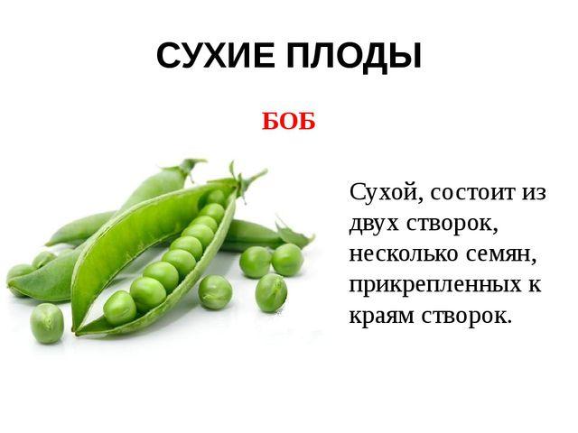 СУХИЕ ПЛОДЫ БОБ Сухой, состоит из двух створок, несколько семян, прикрепленны...
