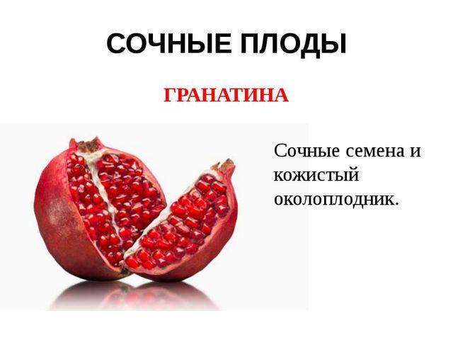 СОЧНЫЕ ПЛОДЫ ГРАНАТИНА Сочные семена и кожистый околоплодник.