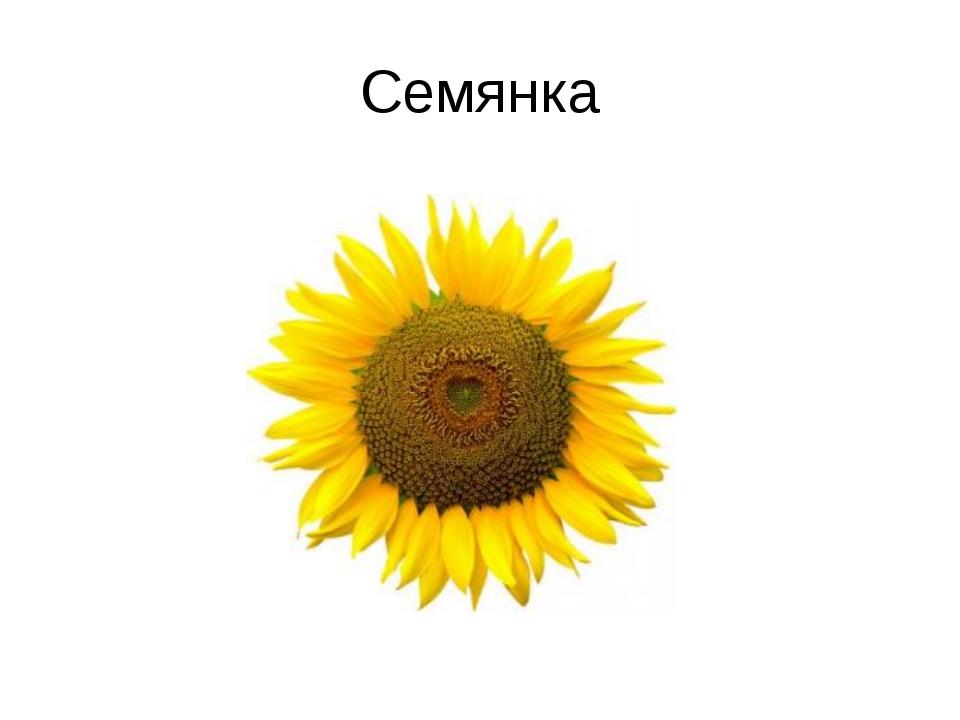Семянка