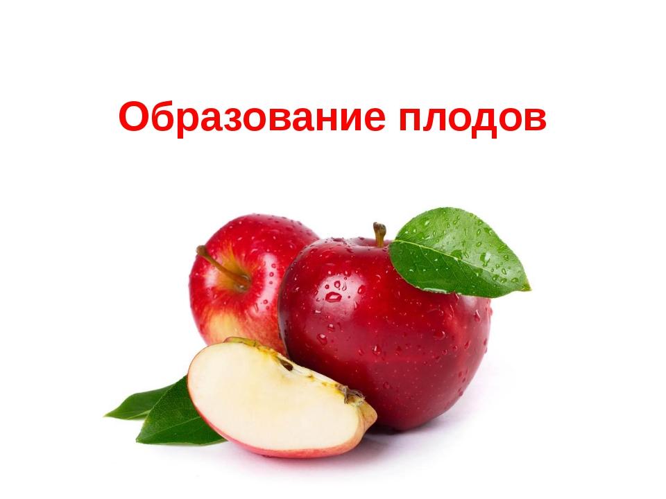Образование плодов