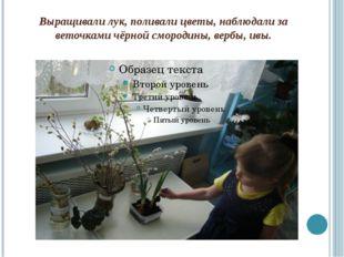 Выращивали лук, поливали цветы, наблюдали за веточками чёрной смородины, верб
