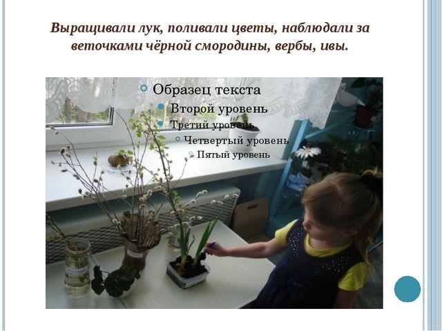 Выращивали лук, поливали цветы, наблюдали за веточками чёрной смородины, верб...
