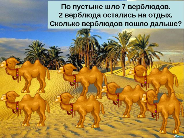 По пустыне шло 7 верблюдов. 2 верблюда остались на отдых. Сколько верблюдов п...