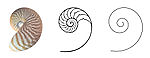 https://upload.wikimedia.org/wikipedia/commons/thumb/e/ed/Nautilus_Section_cut_Logarithmic_spiral.jpg/150px-Nautilus_Section_cut_Logarithmic_spiral.jpg