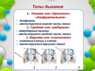 Нижнее или «брюшное», «диафрагмальное» диафрагма, вентилируется нижняя часть