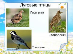 Луговые птицы Жаворонки Трясогузки Перепелки
