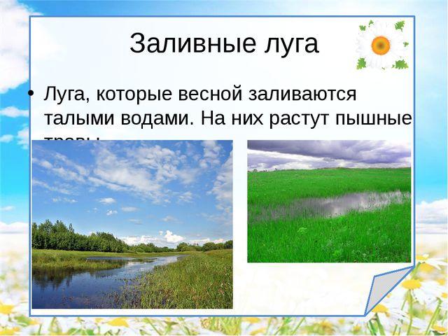 Луга, которые весной заливаются талыми водами. На них растут пышные травы. За...