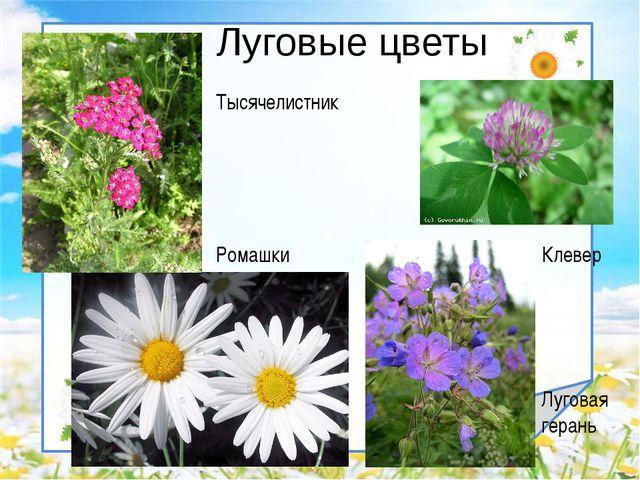 Луговые цветы Клевер Луговая герань Ромашки Тысячелистник