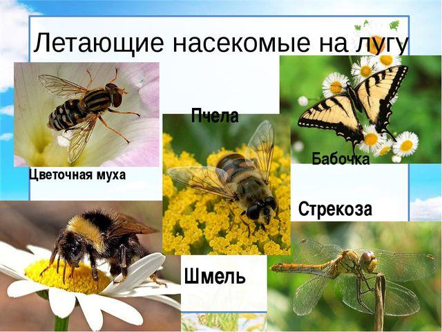 Летающие насекомые на лугу Бабочка Стрекоза Шмель Пчела Цветочная муха