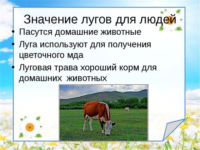Пасутся домашние животные Луга используют для получения цветочного мда Лугова...