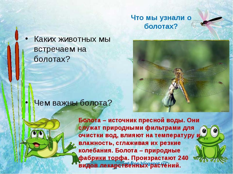 Что мы узнали о болотах? Каких животных мы встречаем на болотах? Чем важны бо...