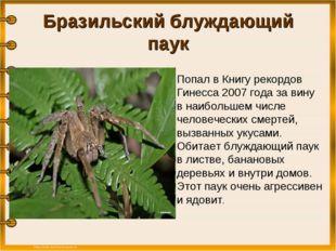 Бразильский блуждающий паук  Попал в Книгу рекордов Гинесса 2007 года за вин