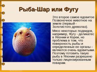 Рыба-Шар или Фугу Это второе самое ядовитое Позвоночное животное на земле (п