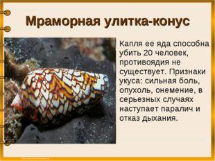 Мраморная улитка-конус Капля ее яда способна убить 20 человек, противоядия н
