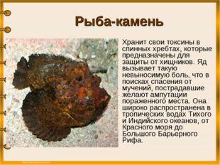 Рыба-камень Хранит свои токсины в спинных хребтах, которые предназначены дл