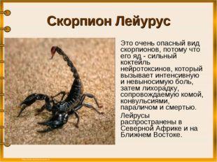 Скорпион Лейурус Это очень опасный вид скорпионов, потому что его яд - сильн