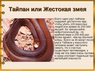 Тайпан или Жестокая змея Всего один укус тайпана содержит достаточно яда, чт