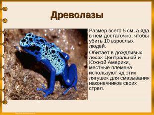 Древолазы Размер всего 5 см, а яда в нем достаточно, чтобы убить 10 взрослых