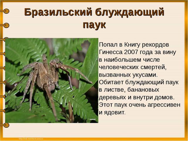 Бразильский блуждающий паук  Попал в Книгу рекордов Гинесса 2007 года за вин...