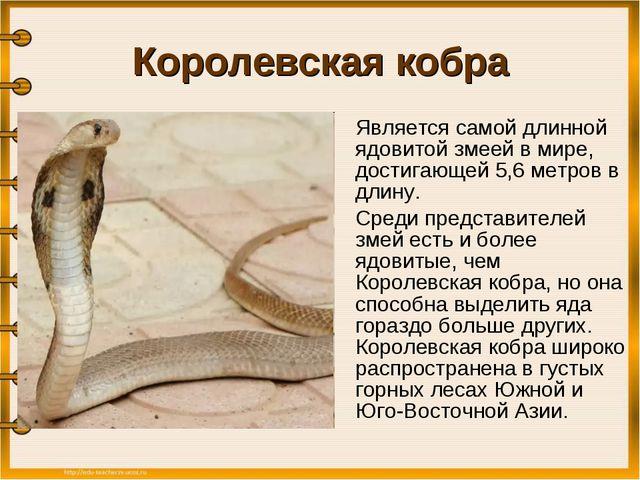 Королевская кобра Является самой длинной ядовитой змеей в мире, достигающей...