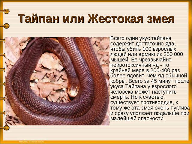 Тайпан или Жестокая змея Всего один укус тайпана содержит достаточно яда, чт...