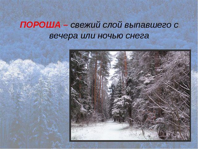 ПОРОША – свежий слой выпавшего с вечера или ночью снега
