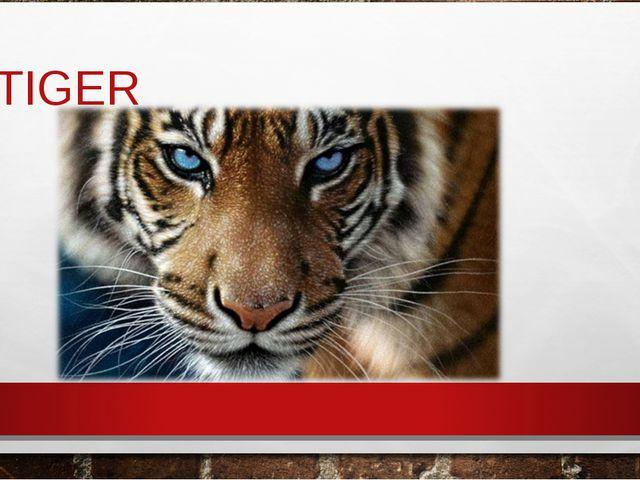 А TIGER
