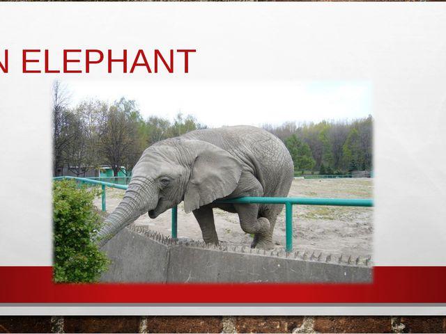 АN ELEPHANT