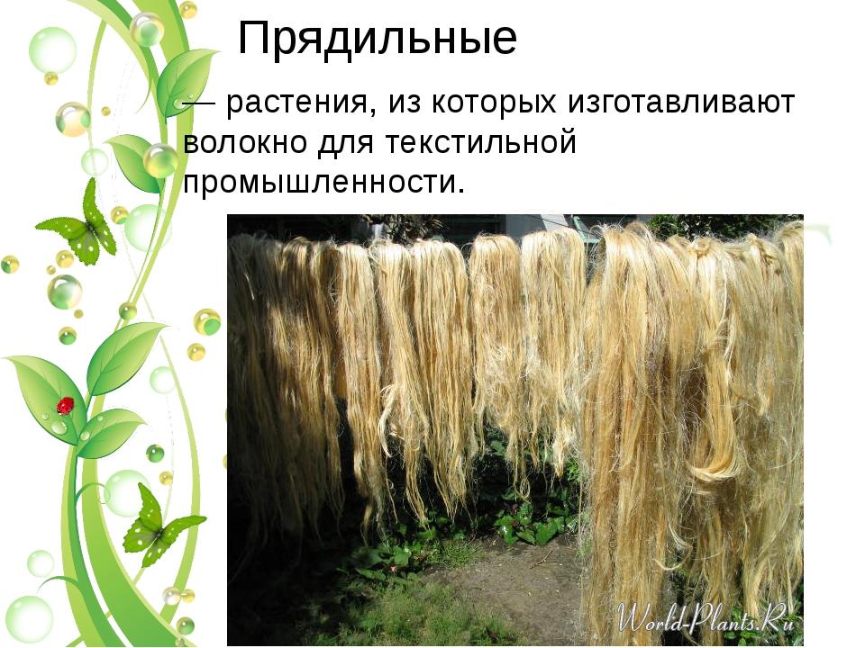 Прядильные — растения, из которых изготавливают волокно для текстильной промы...