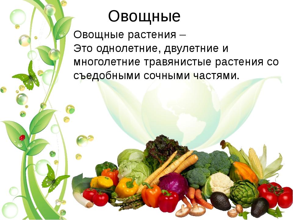 Овощные Овощные растения – Это однолетние, двулетние и многолетние травянисты...