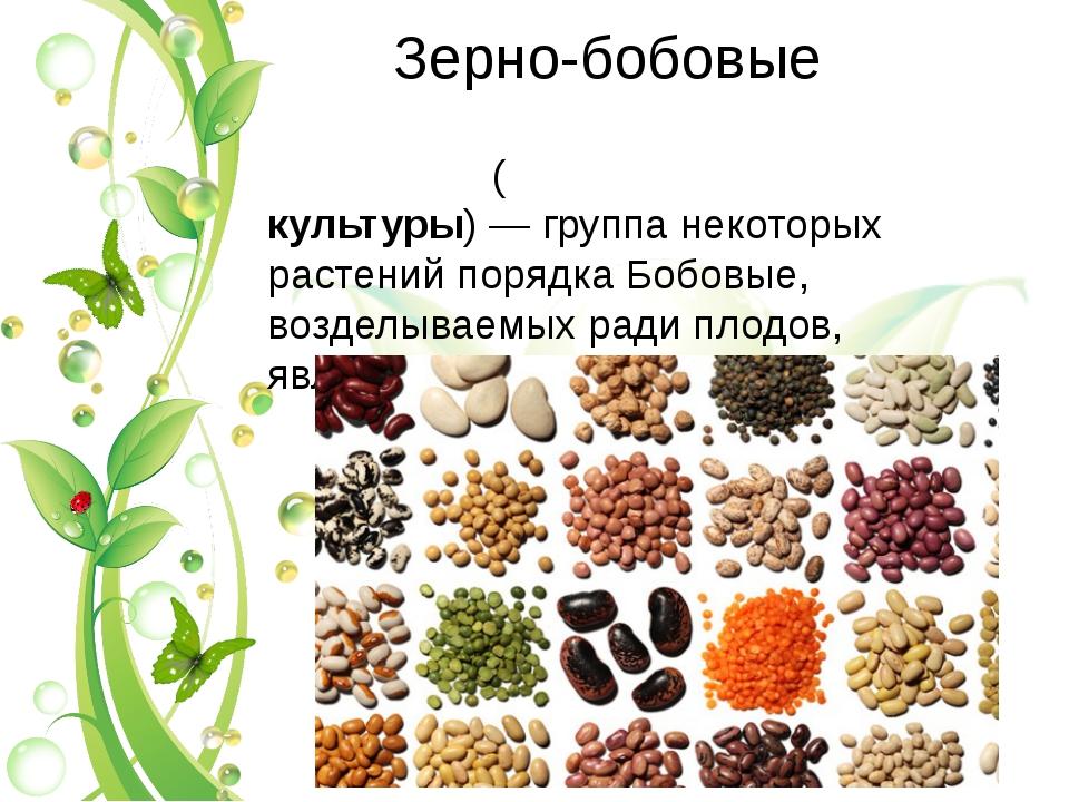 Зерно-бобовые Зерно-бобо́вые культу́ры(зерновы́е бобовые культуры)— группа...