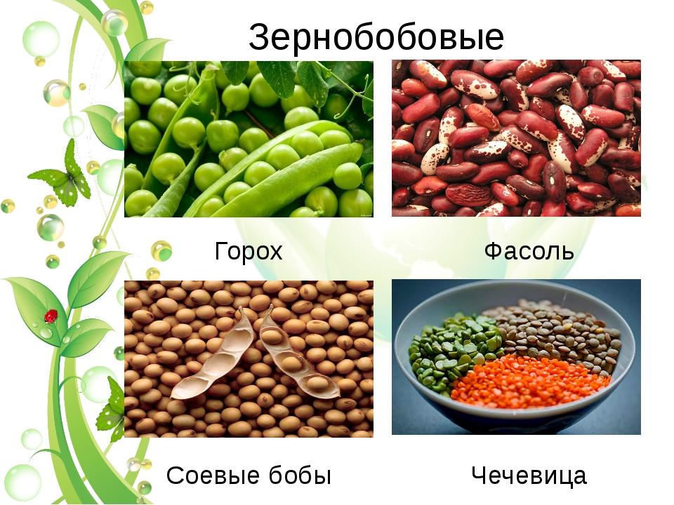 Зернобобовые Гороx Фасоль Соевые бобы Чечевица