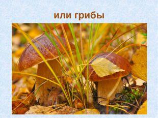 или грибы