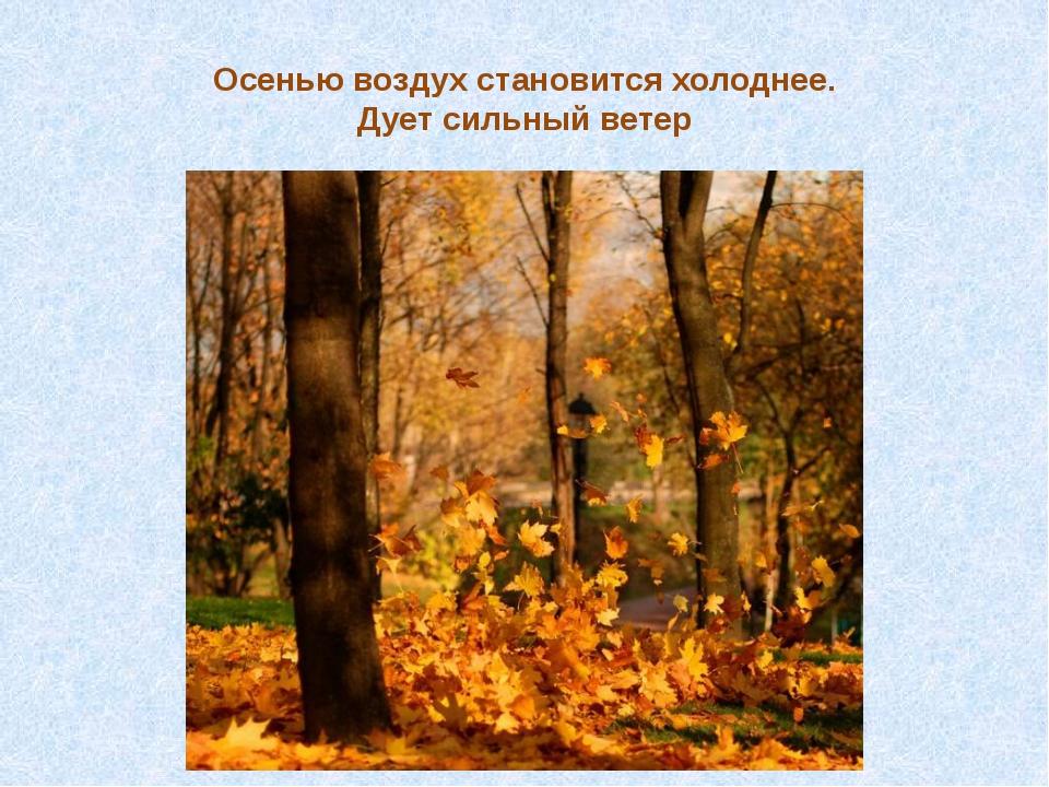 Осенью воздух становится холоднее. Дует сильный ветер