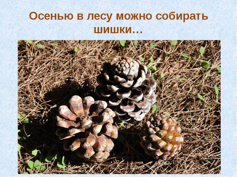 Осенью в лесу можно собирать шишки…