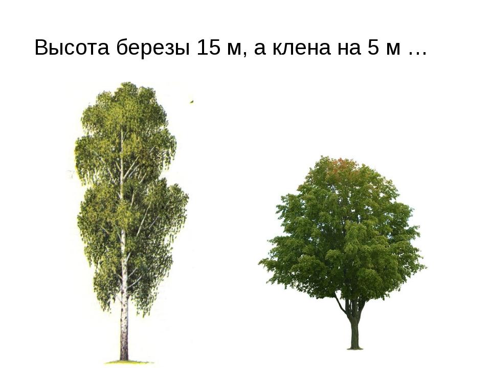 Высота березы 15 м, а клена на 5 м …