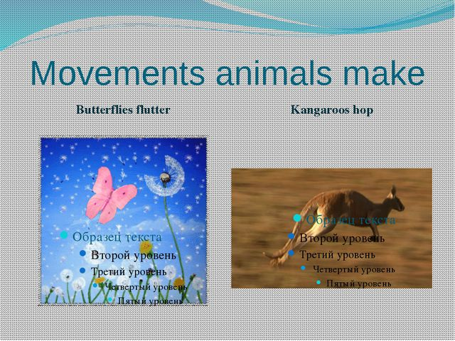 Movements animals make Butterflies flutter Kangaroos hop