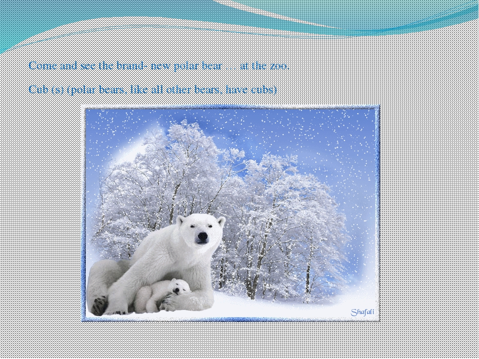 Come and see the brand- new polar bear … at the zoo. Cub (s) (polar bears, l...