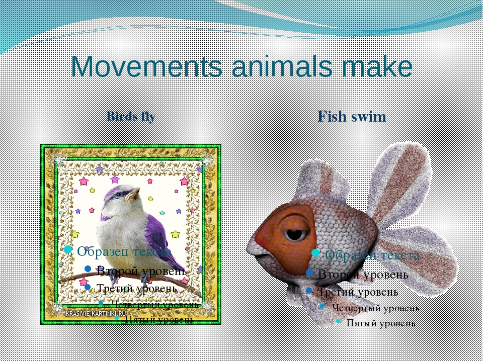 Movements animals make Birds fly Fish swim