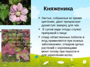 Княженика Листья, собранные во время цветения, дают прекрасную душистую завар
