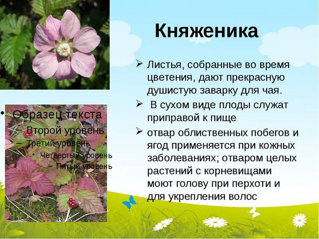 Княженика Листья, собранные во время цветения, дают прекрасную душистую завар...