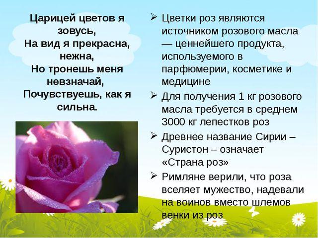 Царицей цветов я зовусь, На вид я прекрасна, нежна, Но тронешь меня невзначай...