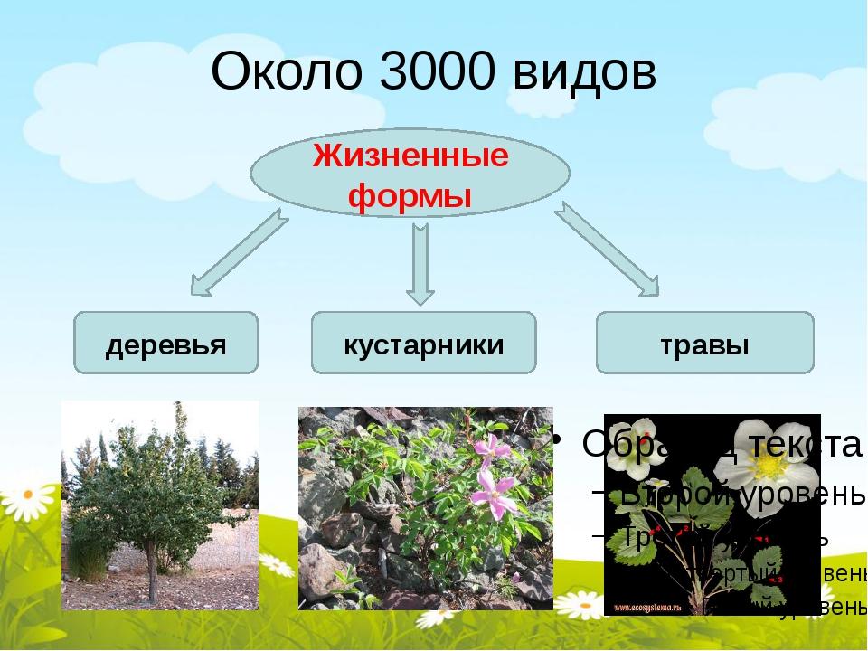 Около 3000 видов Жизненные формы деревья кустарники травы