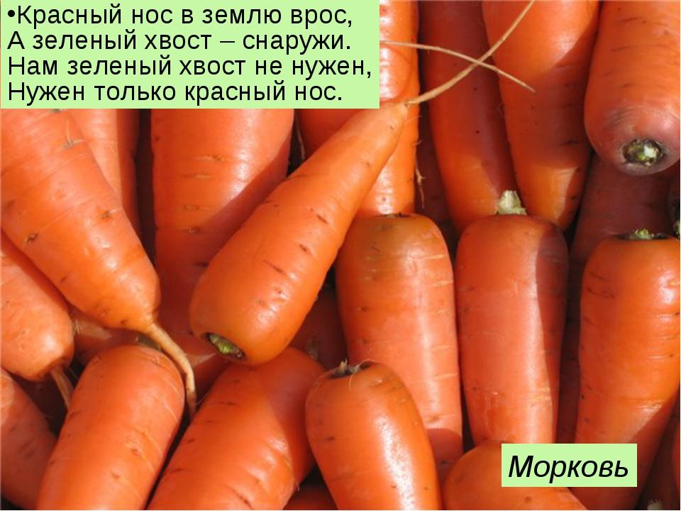 Красный нос в землю врос, А зеленый хвост – снаружи. Нам зеленый хвост не нуж...