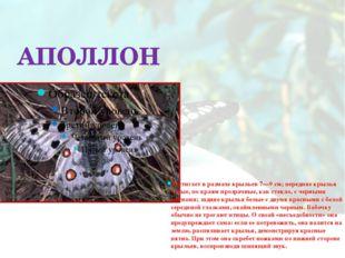 АПОЛЛОН Достигает в размахе крыльев 7—9 см; передние крылья белые, по краям п