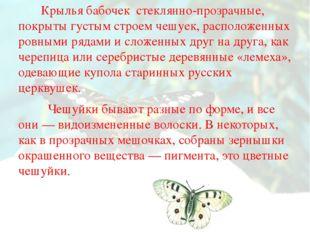 Крылья бабочек стеклянно-прозрачные, покрыты густым строем чешуек, расположе