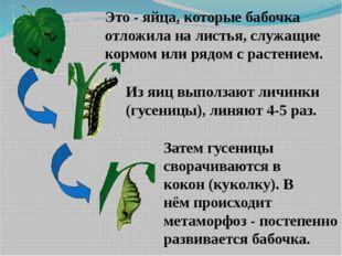 Это - яйца, которые бабочка отложила на листья, служащие кормом или рядом с р
