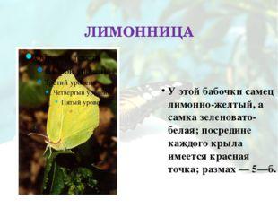 ЛИМОННИЦА У этой бабочки самец лимонно-желтый, а самка зеленовато-белая; поср