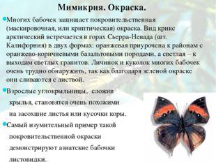 Мимикрия. Окраска. Многих бабочек защищает покровительственная (маскировочная
